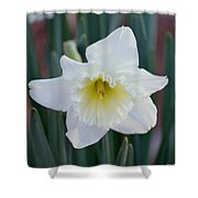 Face Of A Daffodil Shower Curtain