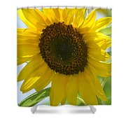 Face To Face With A Sunflower Shower Curtain