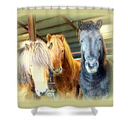The Furry Trio Facing Me Again  Shower Curtain