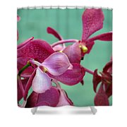 Fade Into Pink Shower Curtain