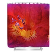 Fade To Freesia - Iridaceae Shower Curtain