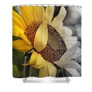 Faded Sunflower Shower Curtain