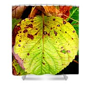 Fading Hydrangea Leaf Shower Curtain