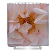 Faintly Pink - Rose Shower Curtain