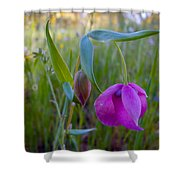 Fairy Lantern In Park Sierra-ca Shower Curtain