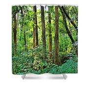 Fairy Trees Shower Curtain