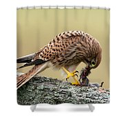 Falcon's Breakfast  Shower Curtain