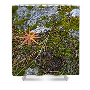 Fall And Moss Shower Curtain