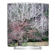 Fall At Cades Cove Shower Curtain by Todd Blanchard