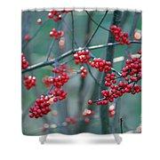 Fall Berries Shower Curtain