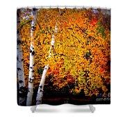 Dazzling Birch Shower Curtain