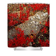 Fall Blueberries And Moss-h Shower Curtain