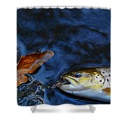 Fall Brown Trout Shower Curtain