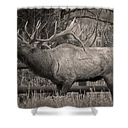 Fall Bugling Shower Curtain