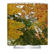 Fall Canopy Shower Curtain