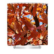 Fall Color 2 Shower Curtain