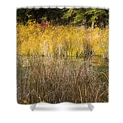 Fall Color At Banff Spring Basin Shower Curtain