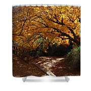 Fall Color Path Shower Curtain