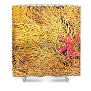 Fall Colored Horsetail And Fireweed  Shower Curtain