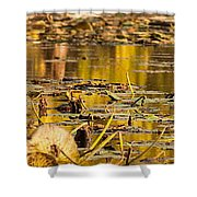 Fall Colored Pond Shower Curtain