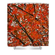 Fall Colors 2014-10 Shower Curtain