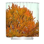Fall Colors 2014-11 Shower Curtain
