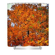 Fall Colors 2014 - 14 Shower Curtain
