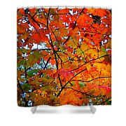 Fall Colors 2014-4 Shower Curtain