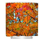Fall Colors 2014-5 Shower Curtain