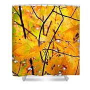 Fall Colors 2014-7 Shower Curtain