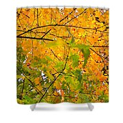 Fall Colors 2014-8 Shower Curtain