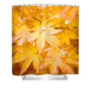 Fall Colors 6664 Shower Curtain