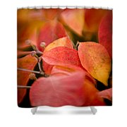 Fall Colors 6675 Shower Curtain
