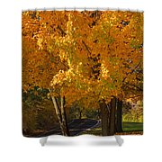 Fall Colors Shower Curtain by Adam Romanowicz