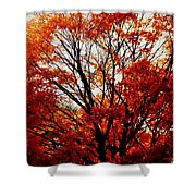 Fall Colors Cape May Nj Shower Curtain