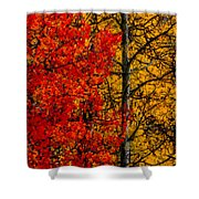 Fall Colors Dp Shower Curtain