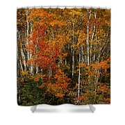 Fall Colors Greeting Card Shower Curtain