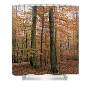 Fall Colors In Catoctin Mt. Park Shower Curtain
