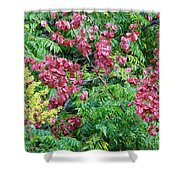 Fall Colors In Florida Shower Curtain