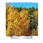 Fall Colors On The Colorado Aspen Trees Shower Curtain
