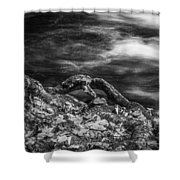 Fall Colors Stream Great Smoky Mountains Painted Bw Shower Curtain