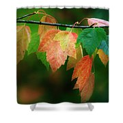 Fall Comes Shower Curtain