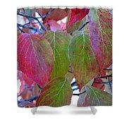Fall Dogwood Leaf Colors 1 Shower Curtain
