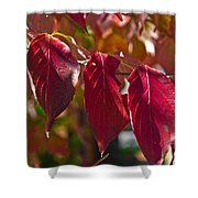 Fall Dogwood Leaves Shower Curtain