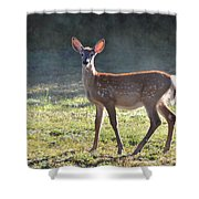 Fall Fawn Shower Curtain