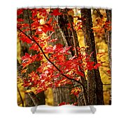 Fall Forest Detail Shower Curtain