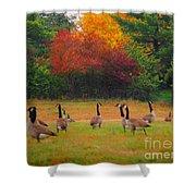 Fall Geese Of Washington Shower Curtain