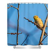 Fall Goldfinch Shower Curtain