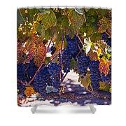 Fall Grape Harvest Shower Curtain