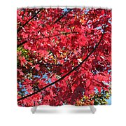 Fall In Illinois Shower Curtain